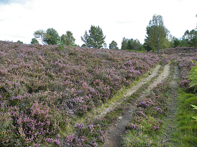 Track Among the Heather