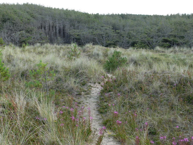 Path back to Newborough Forest