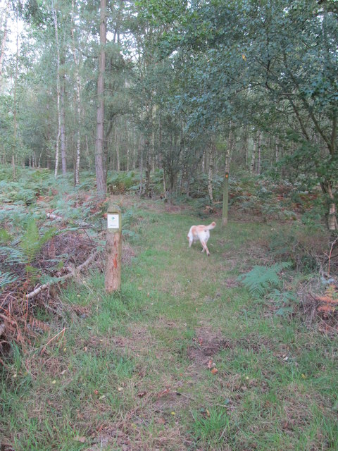 Public footpath into the Woodland trust's Hammond's Copse