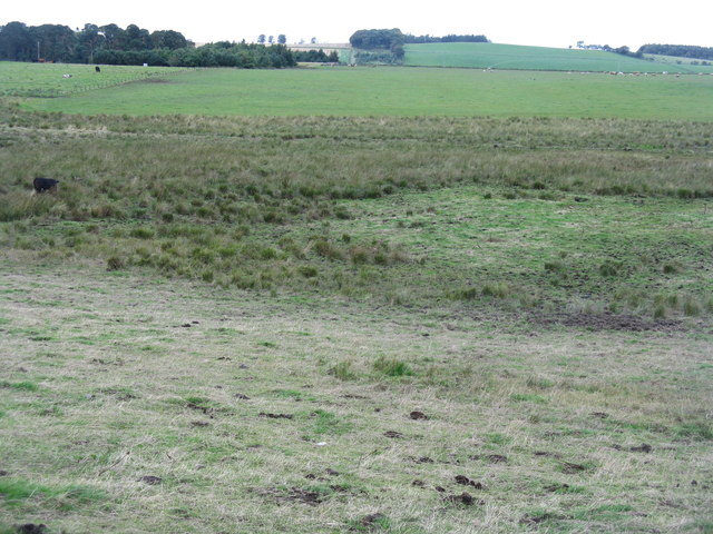 Rough pasture and improved grassland at Whitelaw