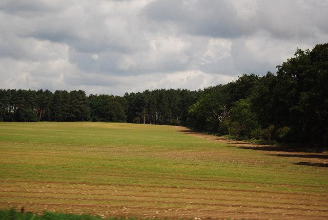 Farmland and woodland by the A11