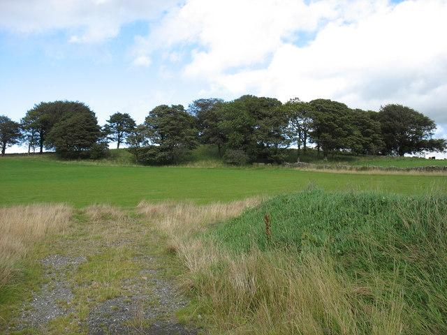 Fields and woods near Eycott Hill