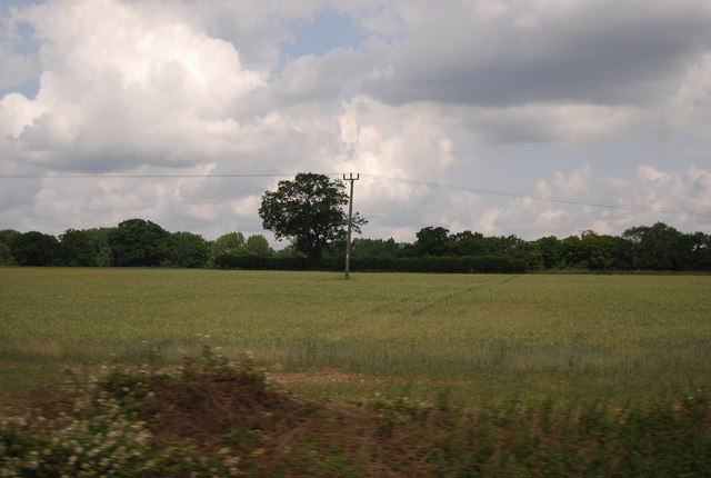 Telegraph pole in a wheat field