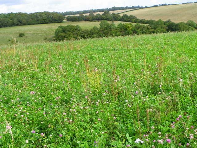 Clover field, Portfield Road