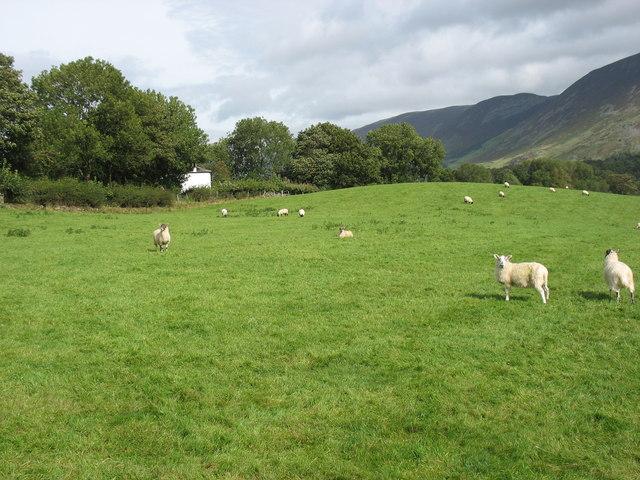 A field near Loweswater