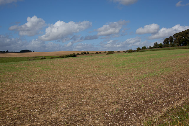 Field west of Hydes Cottages, Fawley Lane