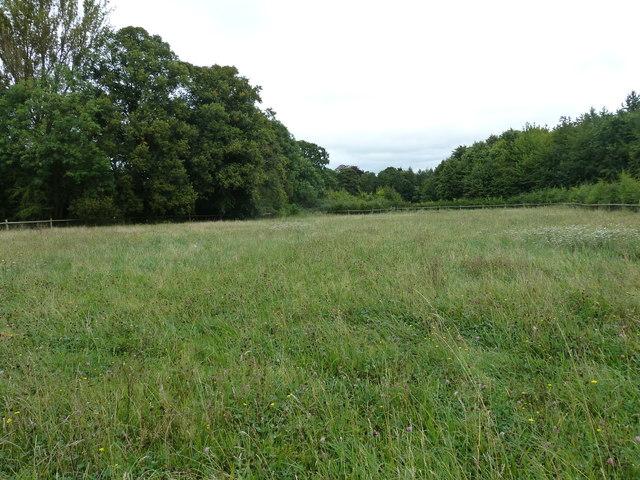 COAM 15: a meadow  in September