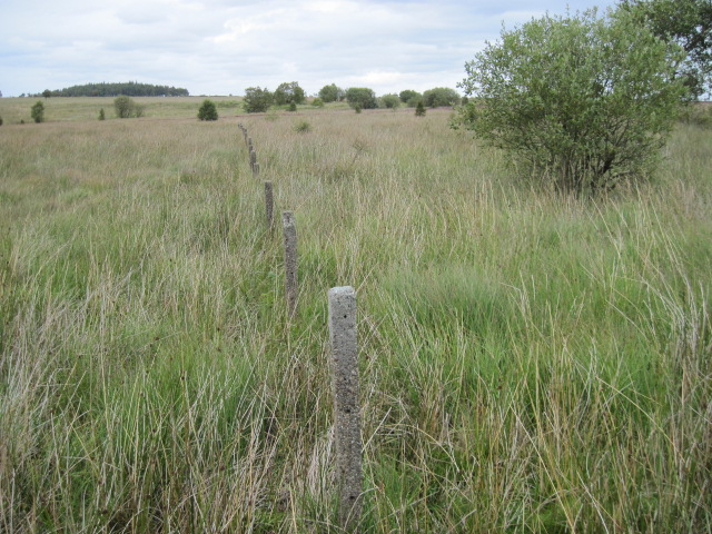 The end of a line of concrete posts on Leash Fen