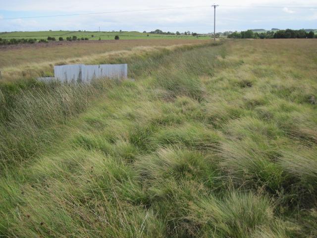 Drainage ditch on Leash Fen