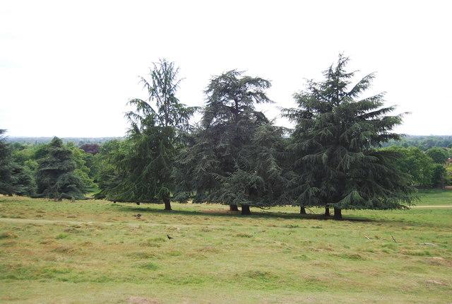 Trees in Petersham Park (Richmond Park)