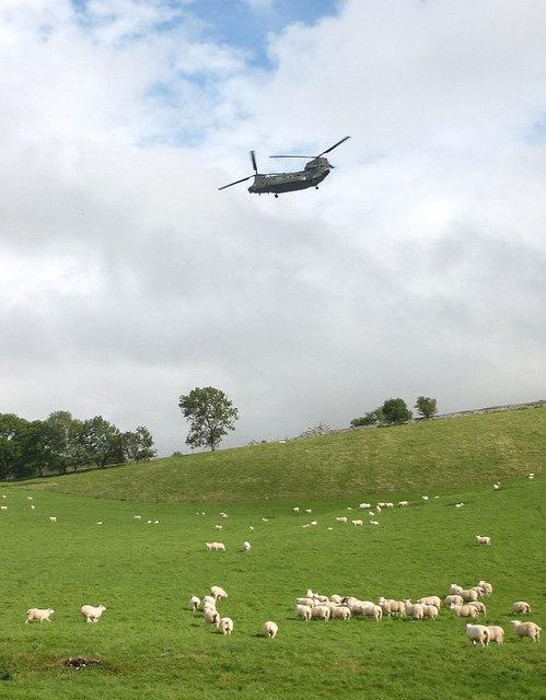 Nateby sheep and a Chinook