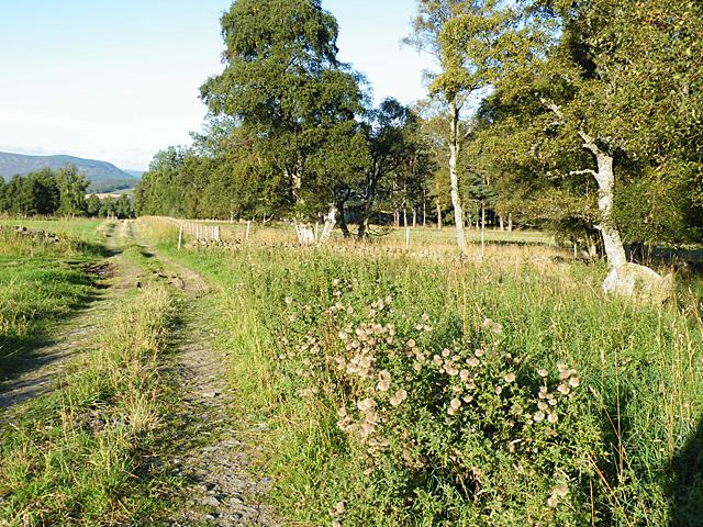 Track near Clearfield