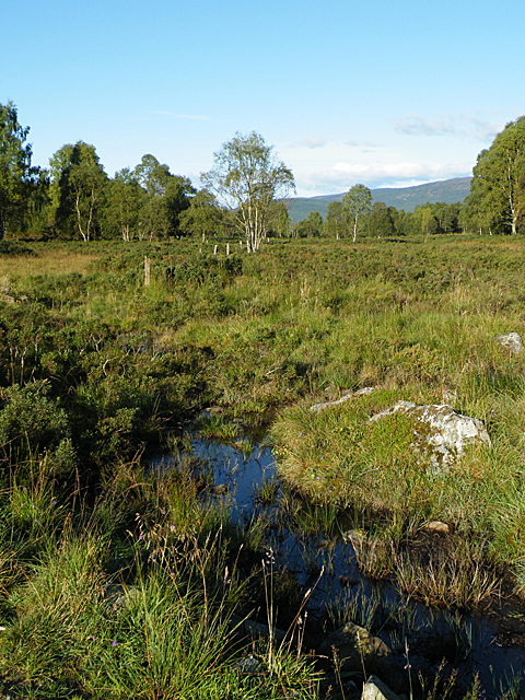 Boggy Ground (west)