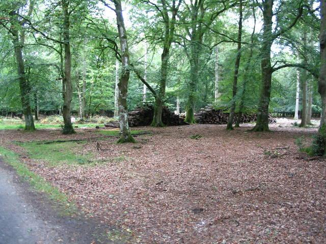 Piled logs in New Copse Inclosure