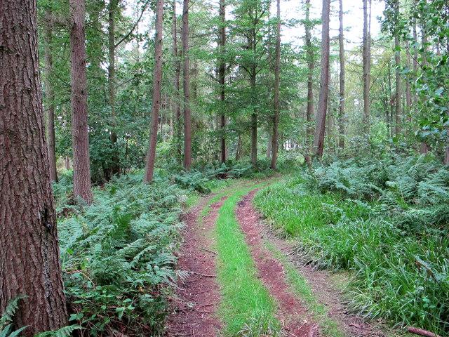 Track in Flisk Wood