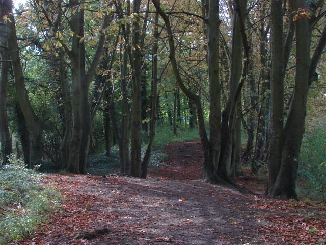 Woodland, Park Barn