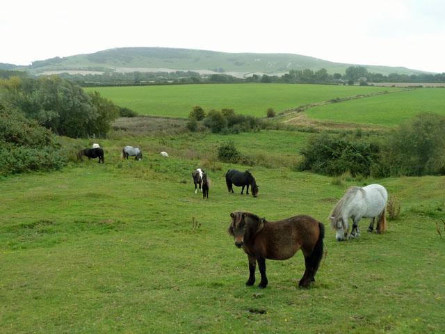Ponies on the footpath