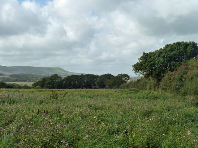 Footpath through a thistly field