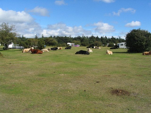 Cattle and caravans