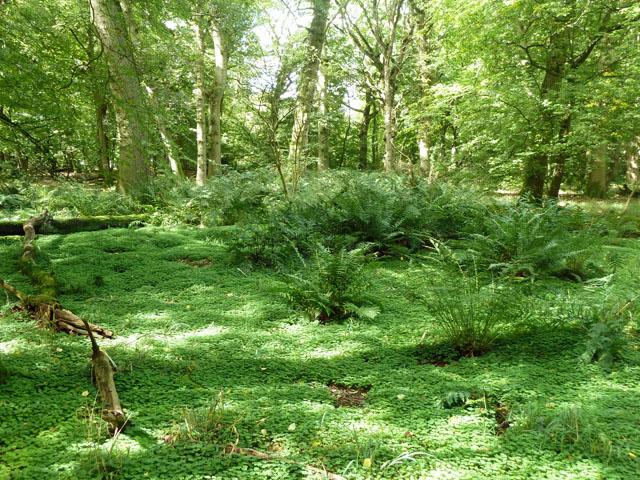 In Pollard's Wood