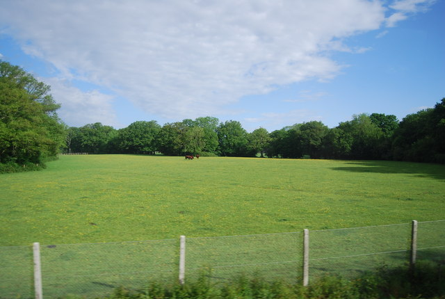 Horses in a field near Grassy Copse