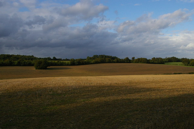 After the harvest: looking north off the London Loop