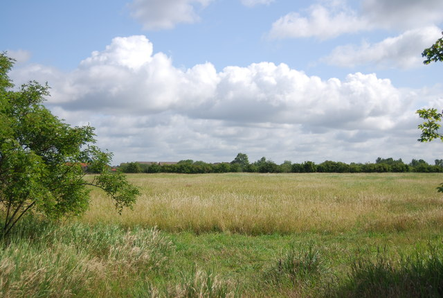 Grassland, Hornchurch Country Park