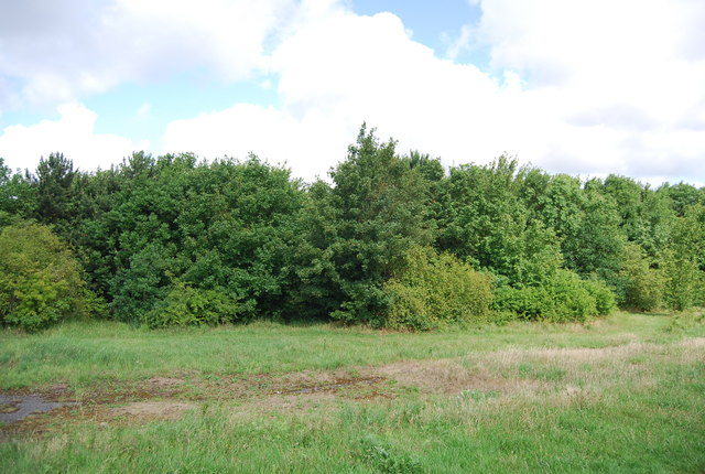 Woodland, Hornchurch Country Park