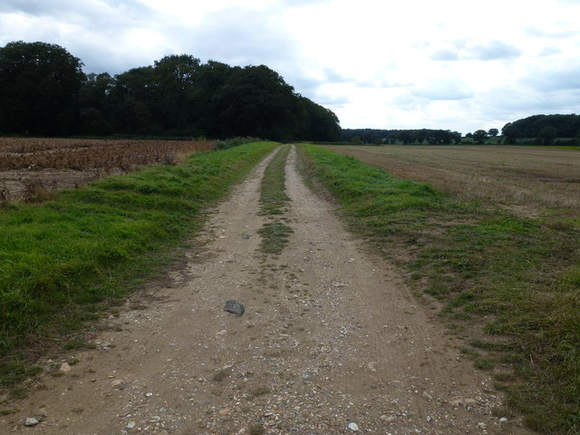 Flint and sand track in Norfolk