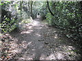 SK3178 : Footpath in Holmesfield Park Wood by Chris Wimbush