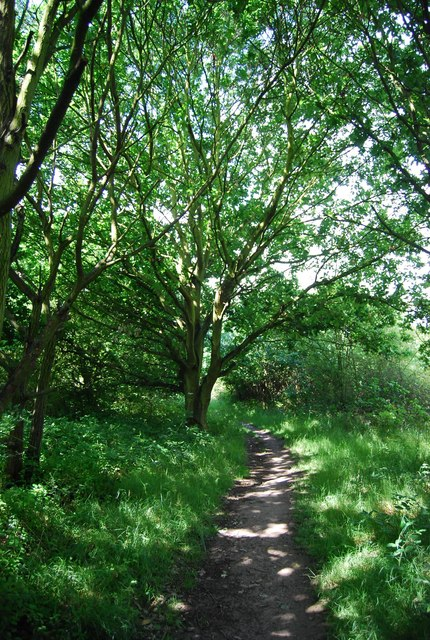 Wooded footpath