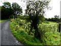 C3031 : Lane, Killygarvan by Kenneth  Allen
