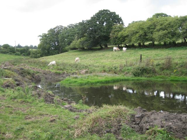 Pond at Shuttermoor