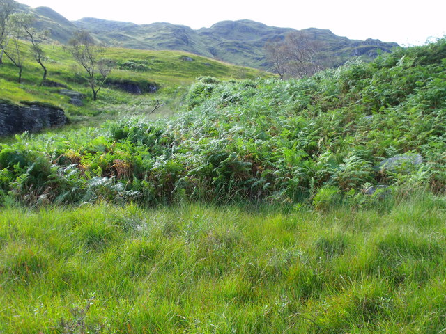 Lower slopes of Stob na Cleisg near Loch Katrine in The Trossachs
