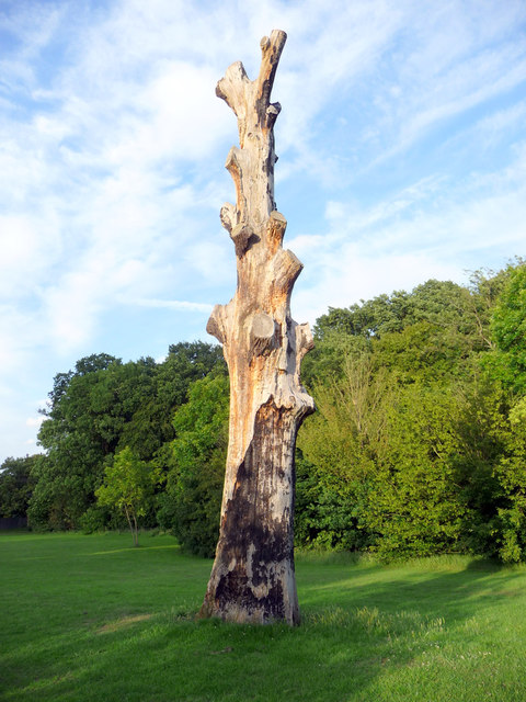 Tree struck by Lightning, Grovelands Park, London N14