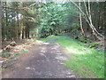 SU8726 : Footpath 1278 forks off right by Dave Spicer