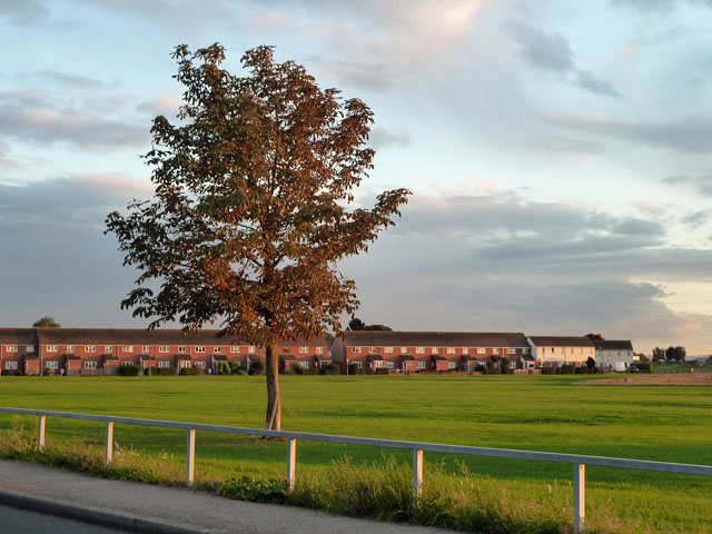 Tree and houses, Chadwell St Mary
