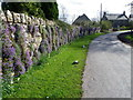 Dist:0.8km<br/>The walls and verges beside the road are decked out in spring colours of mauve Aubretia and yellow Daffodils.