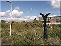 TQ3671 : National Network Cycle Milepost, Lower Sydenham by David Anstiss