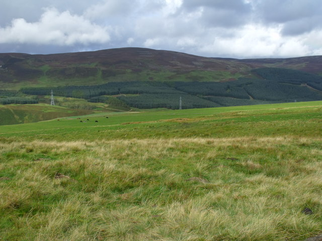 Grazing land and herd of cows on Hill of Trusta near Brechin