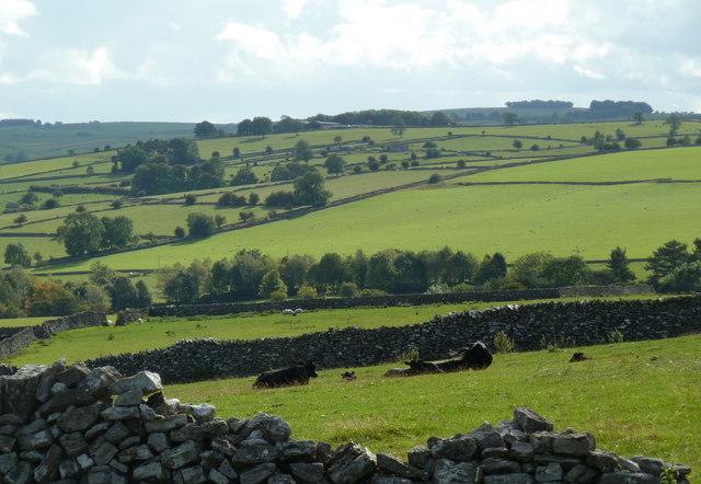 Grazing land above Lathkill Dale