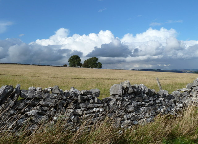 Limestone wall and meadow