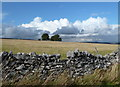 SK2166 : Limestone wall and meadow by Andrew Hill