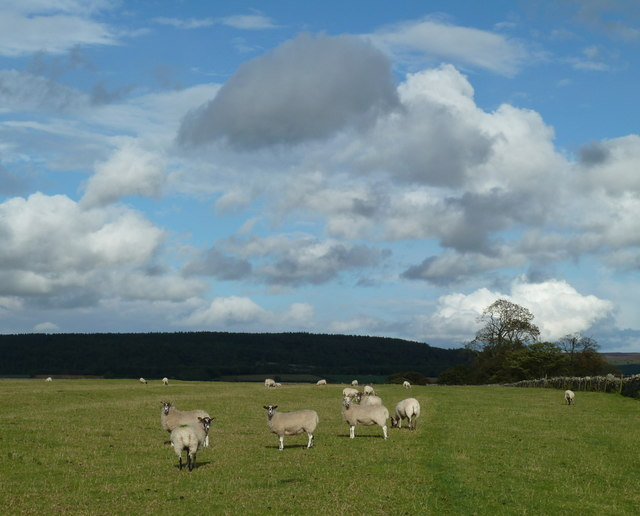 Grazing land, Haddon Fields