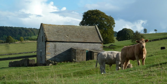 Barn and cattle near Haddon Hall
