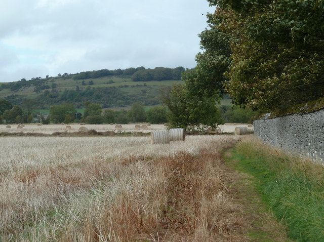 Harvested field by Long Rake Plantation