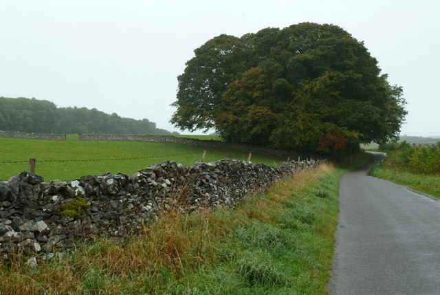 Lane towards line of trees