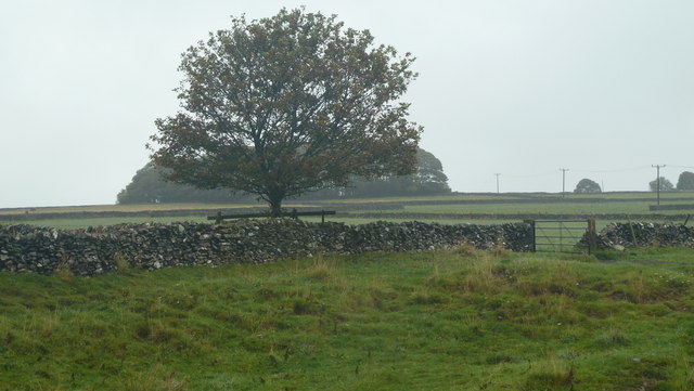 Upland plateau, lone tree and distant copse
