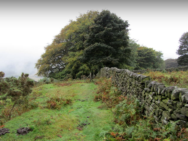 Footpath on High Lees