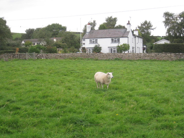 A sheep at Manley Common